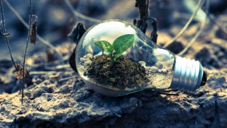 Going green: Businesses must offer sustainability and social responsibility